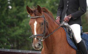 Grayson Schirmer horse riding