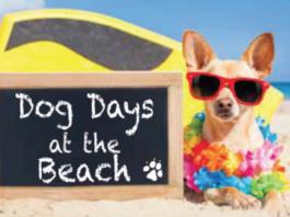 Dogs Sullivan's Island Beach