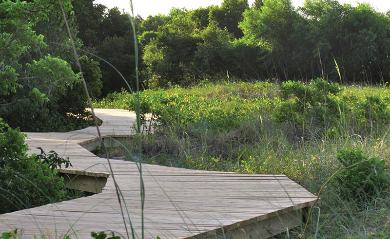 Sullivan's Island's Nature Boardwalk
